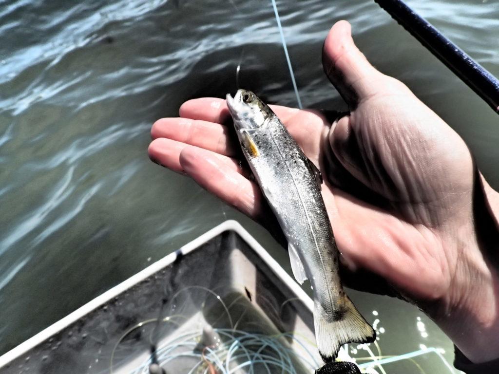 Pas vores små fisk når du fisker i den kommende periode