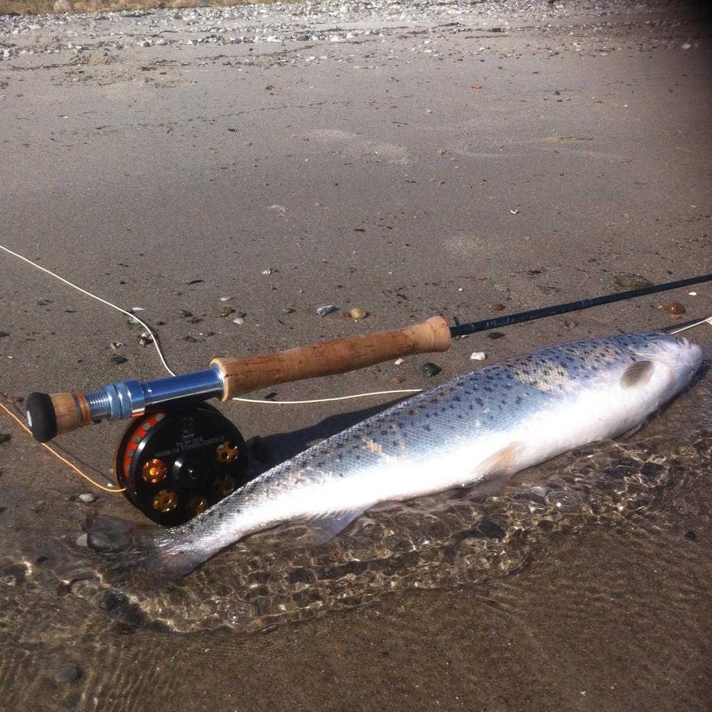 fiskerapport