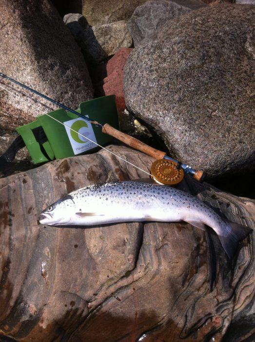 fiskerapport2