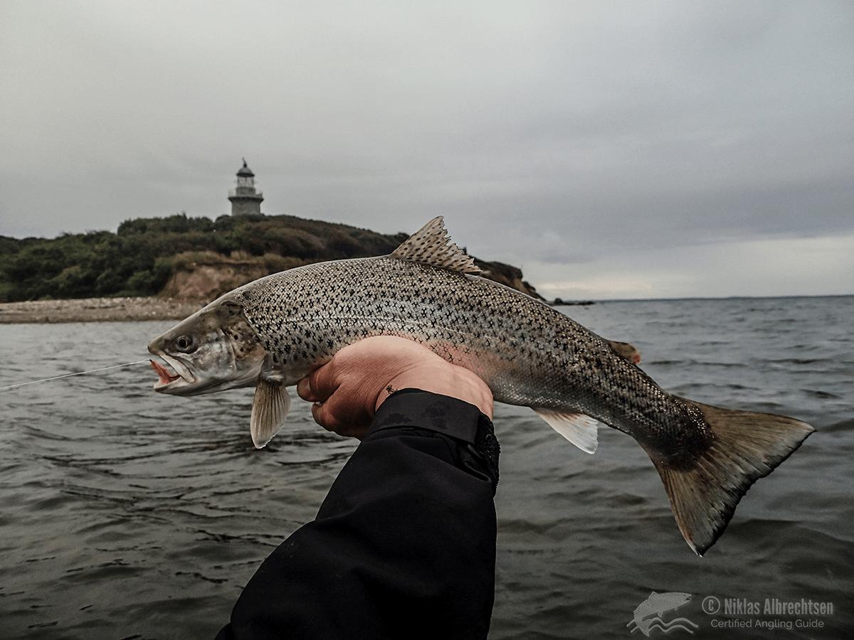 Slet dine spor på nettet – ellers afsløres dine fiskepladser