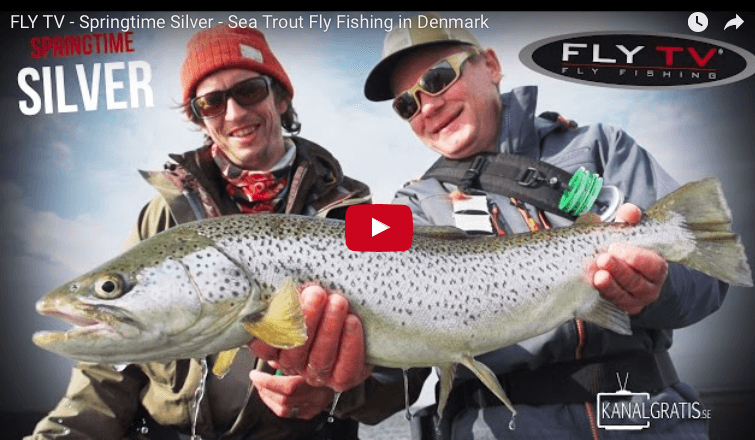 Springtime Silver - Sea Trout Fly Fishing in Denmark