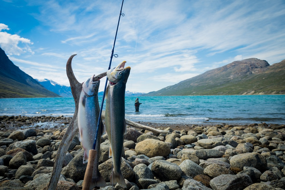 DSC_4709_fjord_fisk