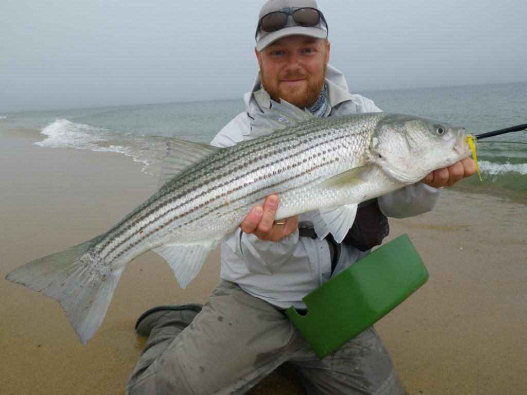 Cape Cod - Stripers