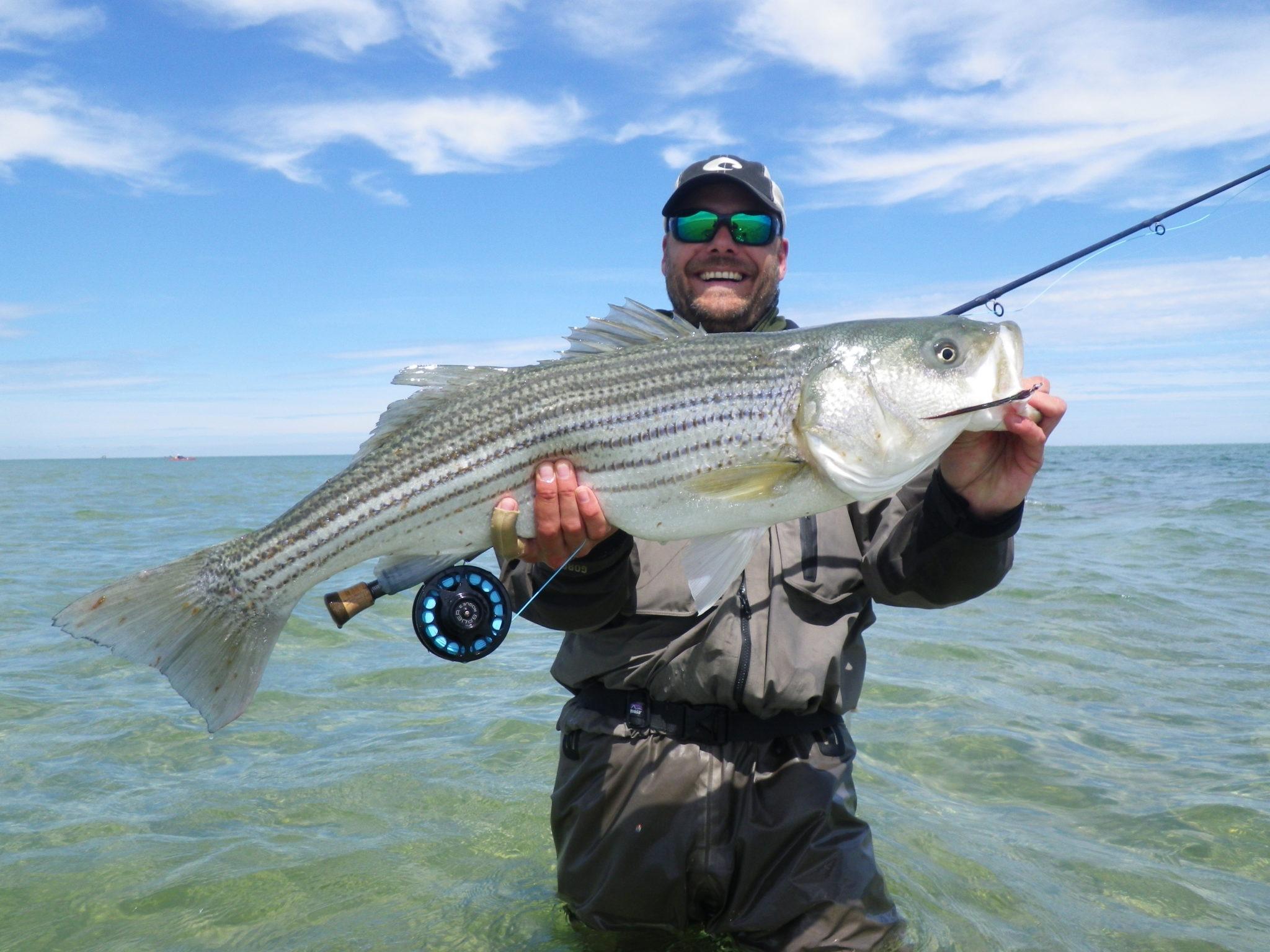 Cape Cod – Stripers – Tropisk kystfiskeri