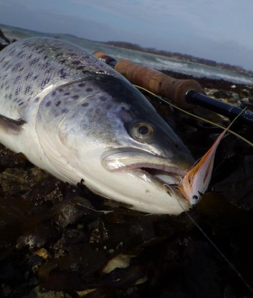 baitfish 3