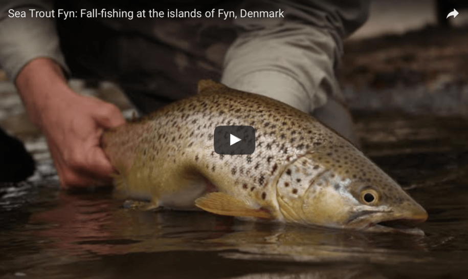 Fall-fishing at the islands of Fyn, Denmark
