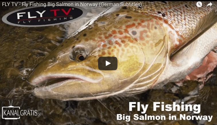 Big Salmon in Norway