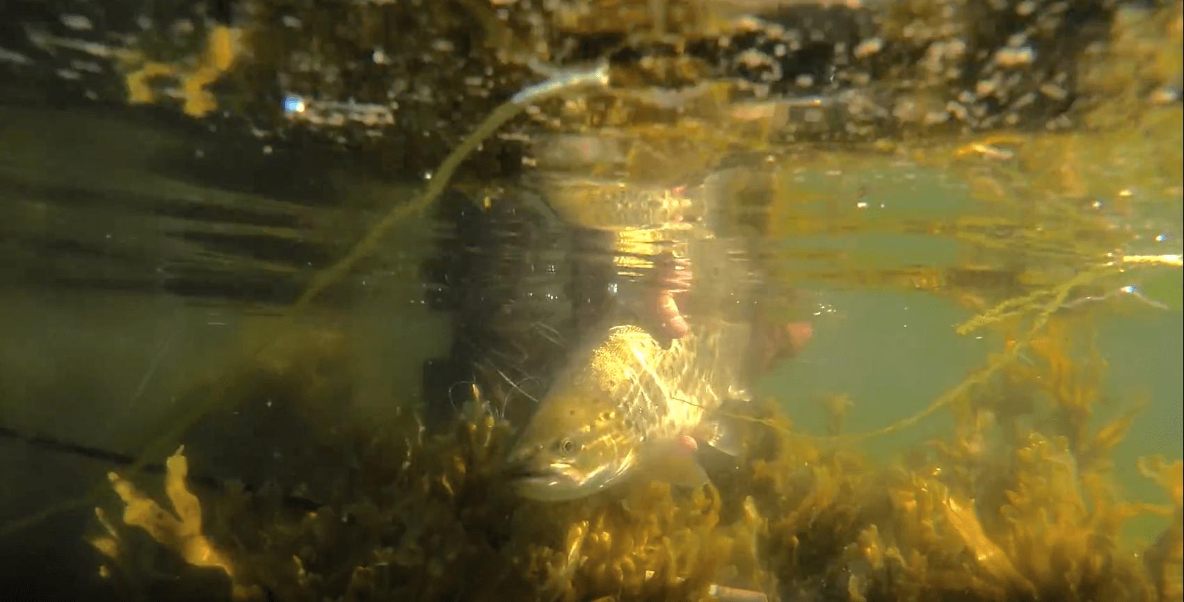 Fly Fishing Herbst - En fiskefilm fra Efteråret