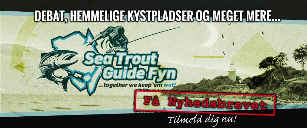 STGF Newsletter banner