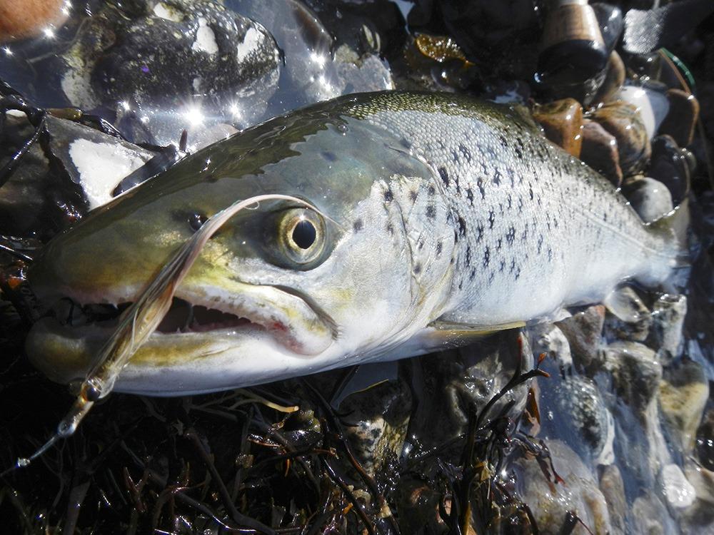 Knolden – En Sydfynsk Perle,Fiskested,Fiskespot,Havøred plads,Sydfyn,Knolden,Knolden – En Sydfynsk Perle til Havørreder