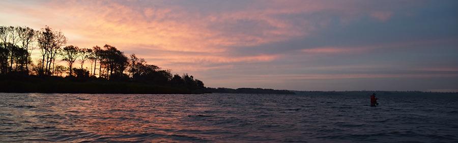 DSC 0456.blamkfisk i fjorden
