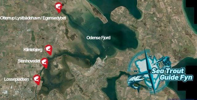 Bedste Fiskepladser på vestsiden i Odense Fjord til Havørreder